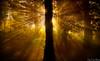 IRUDI KLIK BAZTAN (juan luis olaeta) Tags: canon canoneos60d sigma1020 photoshop lightroom paisages landscape amanecer egunsentia dawn otoño autumn udazkena contraluz nature naturaleza baztan nafarroa navarra paisvasco euskalherria basquecountry