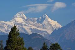 A mountain called Nandadevi.. (draskd) Tags: mtnandadevi nandadevipeak nandadeviwest nandadevieast chaukori uttarakhand draskd nikon mountainscape peakery himalayanpeak himalayas 211216