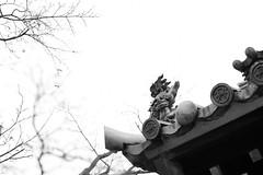 20161229 Nagoya walking 3 (BONGURI) Tags: 名古屋市 愛知県 日本 jp bw monochrome モノクロ モノクローム 白黒 鬼瓦 roof buddhism kyukokujitemple kyukokuji 久国寺 寺院 仏教 仏教寺院 kitaward kita 北区 nagoya 名古屋 aichi 愛知 nikon df afsnikkor50mmf18gspecialedition