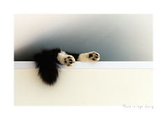 49/52: Feet (Explored) (hehaden) Tags: feet paws pads tail cat lucy cupboard 52photos2016