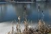 Rohrkolben (Pixelkids) Tags: rauhreif bayern olching fischweiher winter winterlandschaft landschaft