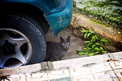 Kitty (Kym.) Tags: andalucía andalusia cat day9 kitty nerja otherpeoplesgang spain