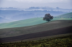 Lone tree (Giulio Mazzini) Tags: tree hill lone solitary siena tuscany country crete senesi italu fairy green