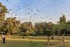 0W6A9113 (Liaqat Ali Vance) Tags: nature people birds trees colors google yahoo liaqat ali vance photography lahore punjab pakistan lawrence garden