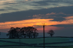Birds on a (hot) wire! (In Explore 24.12.16) (andythomas390) Tags: sunset dusk birds orange trees nikon d7000 18200mm
