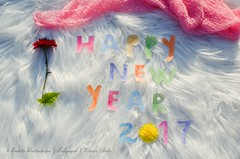 Happy New Year 2017 (Sanhita Bhattacharjee) Tags: sanhitabhattacharjee tripura international india nikond7000 nikkor50mm18g photography betterphotography 121clicks flickr 500px outdoor google celebrated happynewyear 2017