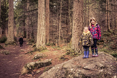 Dunkeld Hermitage 2017-05735 (garypatersondesign) Tags: dunkeld perthshire perth scotland forest trees