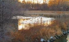Reflections in the water - Explored (Trinimusic2008 -blessings) Tags: trinimusic2008 judymeikle nature light january 2017 toronto to ontario canada panasonicdmczs27