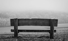 A bench with a view. (andreasheinrich) Tags: landscape nature bench forest fog afternoon winter january blackandwhite blackandwhitephotos misty cold germany badenwürttemberg neckarsulm dahenfeld deutschland landschaft natur bank wald nebel nachmittag januar schwarzweis neblig kalt nikond7000