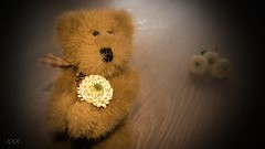 So many  flowers in the garden of my soul (babs van beieren) Tags: teddy bear flower soft 7dwf floralfriday