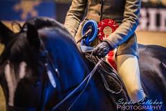 Rosettes (sophiecallahanphotography) Tags: horse pony equine equestrian olympiahorseshow londonolympia horseshow rosettes welshcob welshsectiond mountainandmoorland showpony showhorse redribbon