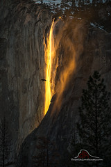 A Raven's Firey Flight - Horsetail Falls (Darvin Atkeson) Tags: california yosemite national park halfdome elcapitan bridalveil forest sierra nevada mountains clouds rest valley canyon glacier darv darvin lynneal atkeson yosemitelandscapescom