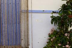 Valdelarco (x-lucena) Tags: crassula ovata valdelarco