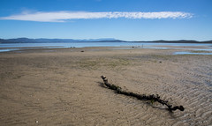 tidal theatre (Keith Midson) Tags: stick tide lowtide tasmania brunyisland isthmusbay bay hobart cloud summer