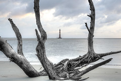 Driftwood and Lighthouse Two