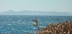 sea breeze (Demetrios Georgalas aka brexians) Tags: light sea summer sun landscape europe wind athens greece seabreeze palaiofaliro athenianriviera picmonkey