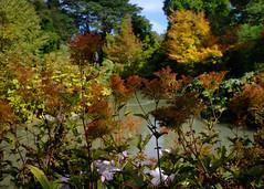 Christchurch Botanical Gardens (emilyjasper) Tags: travel flowers trees newzealand christchurch digital photography fuji explore botanicgardens contempory x100