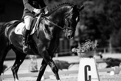 [Chlet--Gobet] Concours 28.06.2015-60 (#vmivelaz) Tags: horse sport canon cheval schweiz switzerland europe suisse l 5d equine lightroom vaud 200mm dressage equitation canoneos5dmarkiii manegechaletagobet vmivelaz