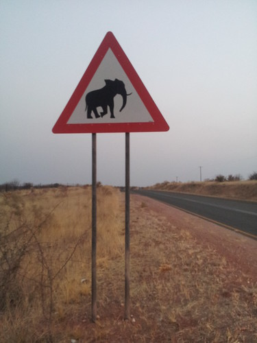 Attention aux éléphants, Namibie