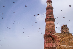 Freedom 2 (upayankita) Tags: india birds delhi minar newdelhi qutab d3200