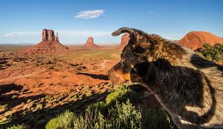 Desert Dog Looks Over His Domain