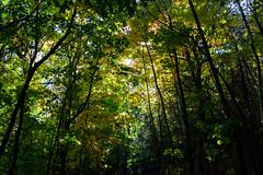 (paola_pensa) Tags: autunno allnaturesparadise