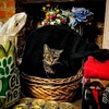Not to be outdone, Mabel took over the basket for a while. We didn't have time to move the groceries. #helpmabel #catsofbushwick (Jimmy Legs) Tags: not be outdone mabel took over basket for while we didnt have time move groceries helpmabel catsofbushwick