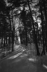 Old Winter (patrickkuhl) Tags: eagleriver upnorth wisc wisco wisconsin winter trees snow cold blackwhite blackandwhite monochrome forest landscape nature film filmcamera filmisnotdead filmphotography analog 35mm olympus olympusxa xa kodak kodakd76 d76 selfdeveloped expiredfilm expired panatomicx reticulation reticulated rangefinder