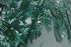 White January 004 (domjuniorlemma) Tags: snow cold freeze white light shadow nature leaf leaves flowers falling winter january tree grass sky clouds snowy photo photography photographer photoshop green blue yellow temperature canon