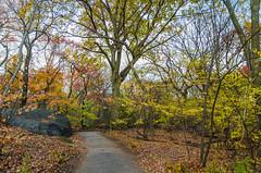 _DSC4515 (purin_cess) Tags: centralpark 2016 autumn 11月 十一月 秋 中央公園 紐約 ny newyork