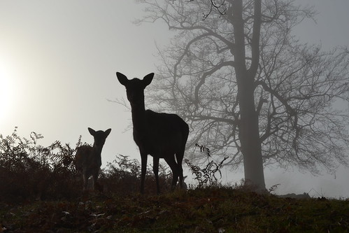 Mother and Daughter in the Mist - Merry Christmas!