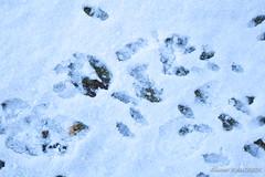 A la croisée des chemins (Olivier_1954) Tags: duree natureetpaysages arbres parentville végétaux chemin crote délai hiver lapin neige parc pattes paysage temps time traces charleroi wallonie belgique be