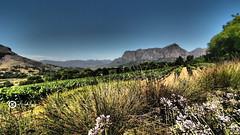 Cape Winelands (Jan-Krux Photography) Tags: stellenbosch hellshoogte pass franschhoek wineyard wine mounteins berge wein weinfarm delair graff landscape landschaft drakenstein olympus omd em1 sky himmel weinreben suedafrika south africa western cape westkap afrika explore inexplore