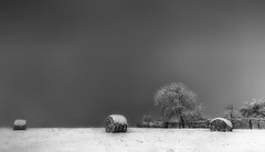 Snowy (RobertFenyo) Tags: winter snow cold blackandwhite