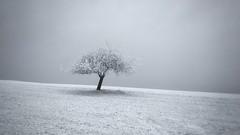 ... (a.penny) Tags: baum tree snow schnee idsteiner land taunus apenny niedernhausen idstein snapseed