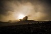 Sur les chemins noirs (PaxaMik) Tags: montagne campagne countryside country plateauderetord arbres mist misty brouillards brume silhouettes herbe grass surlescheminsnoirs chemins sentiers hiver winter clouds nuages sunset