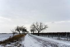 * schnee * snow * II (Anna-logisch) Tags: nikond7000 winter schnee snow cold landschaft landscape outsideisfree