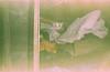 (sрktwo) Tags: superia superia100cn fuji fujicolor fujifilm expired skina wizen cat punk sofia