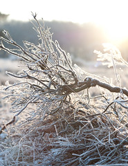 IJs3 (yvetteverwer) Tags: hilversum bussum laren gooi hei heide bos natuur forest field nature winter cold sun zon landschap landscape
