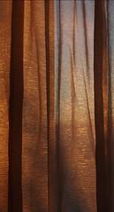 IMGP1432 (i'gore) Tags: montemurlo tende finestre sole casa