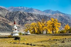 Hemis Stupa (Redust) Tags: hemis ladakh leh india tibetanbuddhism littletibet stupa autumn himalaya hemispompa scenary landscape oriental asia