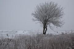 Lonley Tree/Drvo (salaminijo) Tags: tree drvo landscape krajolik cloudy nature priroda light scenery village explore magla foggy mist frozen fog winterday canon eos markiii 1d ef28135mm countryside whitepoint livada arableland snow agrar wood srbija ser banat vojvodina