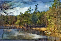 Poetry of earth is never död. (Bessula) Tags: lake tree texture nature water forest season landscape spring sweden scenic bessula coth5