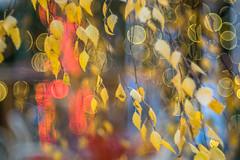 The Wind blows Light Bubbles - Photo # 22 of a Christmas Series (*Capture the Moment*) Tags: 2016 advent altglas backlight backlit blätter fotowalk gegenlicht leaves mog meyergörlitztrioplan10028 meyeroptikgörlitztrioplan10028 nightshot pflanzen sonya7m2 sonya7mii sonya7mark2 sonyilce7m2