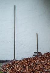 Chit-chat between the rakes. (yellowgreywolf) Tags: rakes yellowgreywolf backyard leafs wall