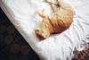 (Jan Phoenix) Tags: 35mm analog film janphoenix cat home canon a2e eos5
