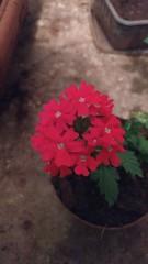 IMG_20161220_010425195 (Rodrigo Ribeiro) Tags: nature natureza flower flor flores garden gardening jardim jardinagem
