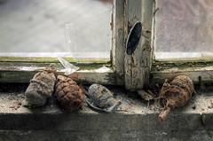 last resort (Tofubratwurst) Tags: lastresort abandoned alt exploration rusty rost kaputt handgranate granate shell tristesse tofubratwurst lostplaces leerstand leipzig lostandfound lost forgotten fenster feucht fensterbank decay düster dunkel dark verfall verlassen vergessen vergesseneorte marode morbides menschlichehinterlassenschaften morsch urbex urbanexploration ue unordnung unrat