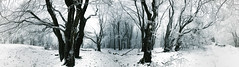 ... (a.penny) Tags: wald winter snow trees schnee baum baume panorama iphone 7 apenny forest