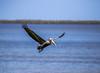 Pelican in Mexico (BS_86) Tags: pelican pelikan ferien reisen travel vacation mexiko mexico water bird canon eos 6d lightroom isla holbox
